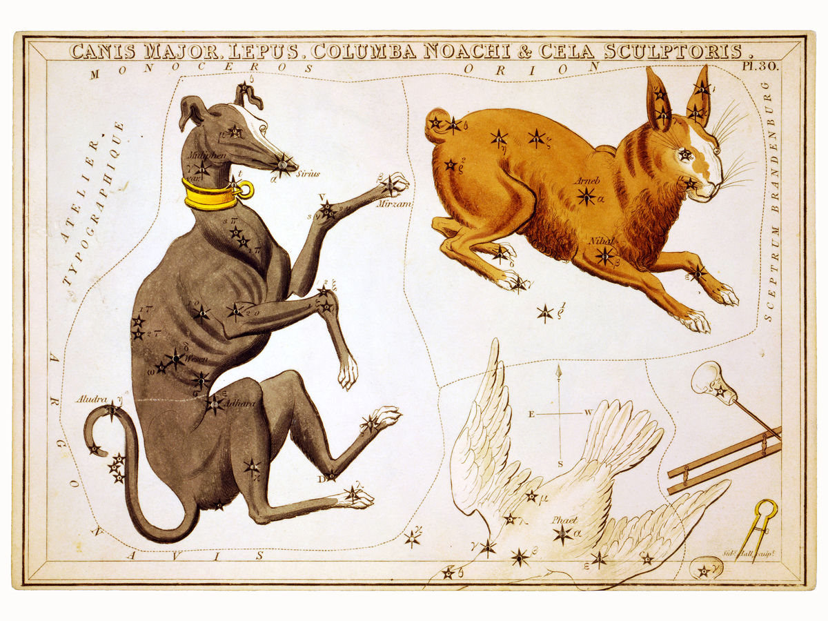 Canis Major, Lepus, Columba Noachi & Cela Sculptoris by Sidney Hall - 1825