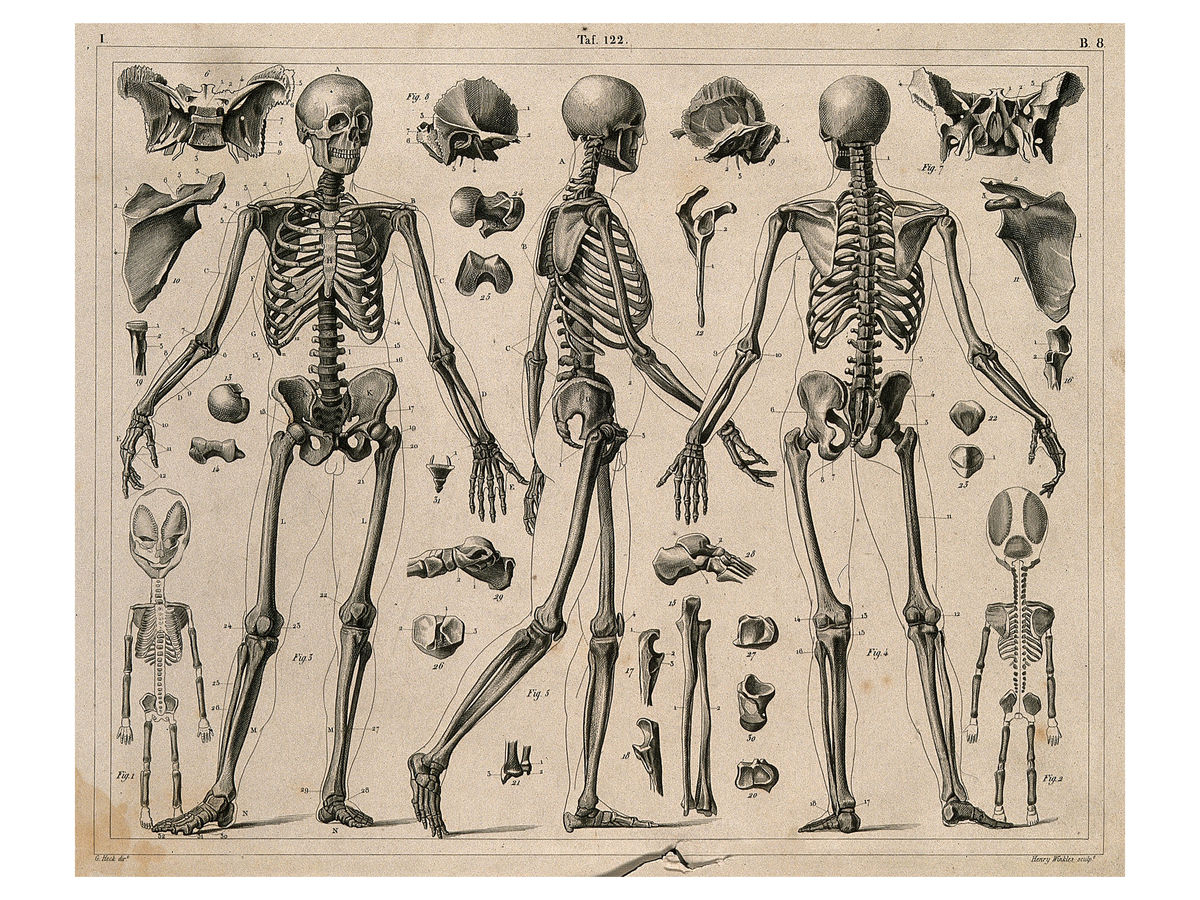 Skeletons and Bones by H. Winkles - 1830