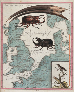 Two Stag Beetles Crawling Over a Map of the World by G. Edwards - 18th Century