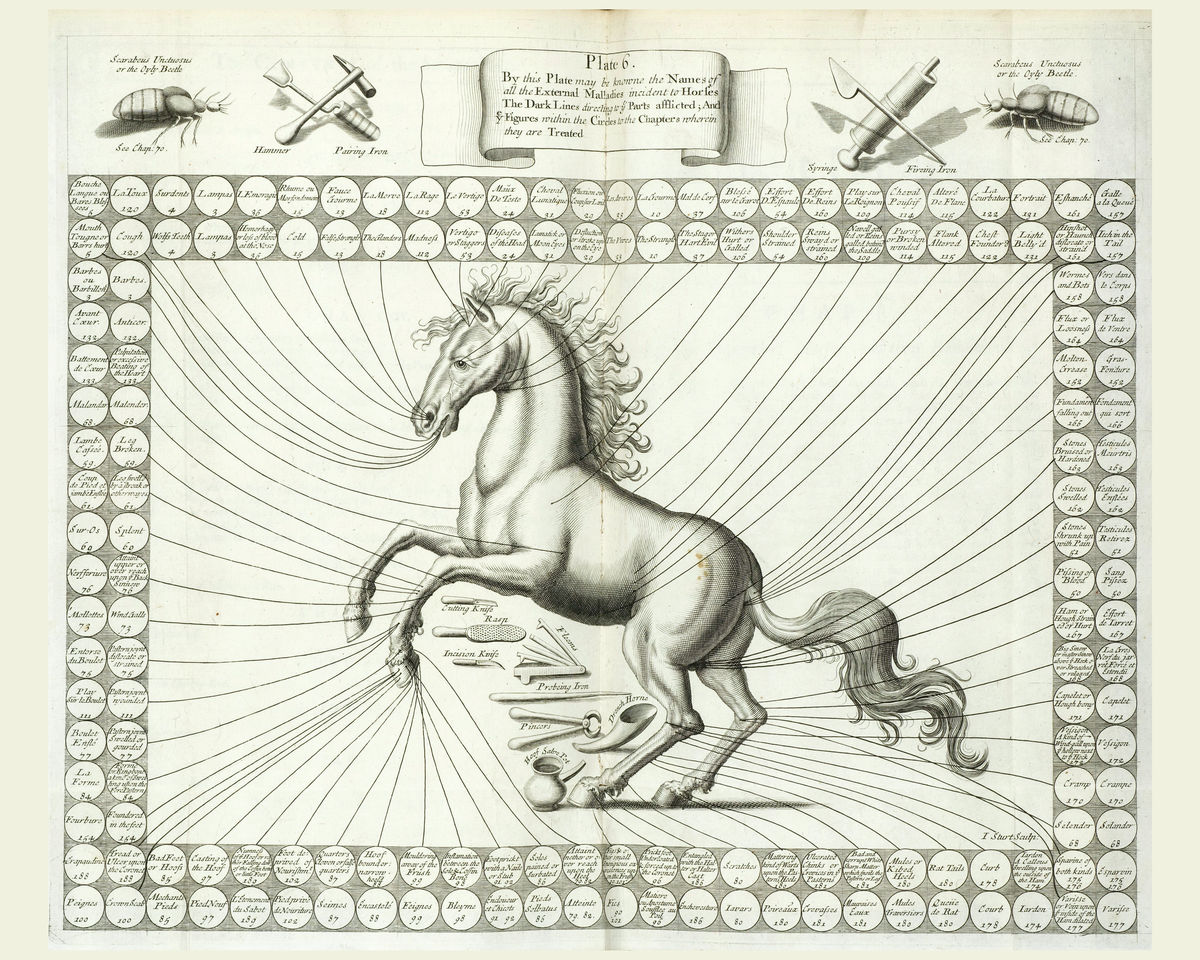 Horse Body Parts, illustration (II) - 1636