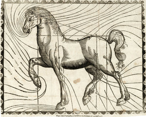 Horse Body Parts, illustration - 1636