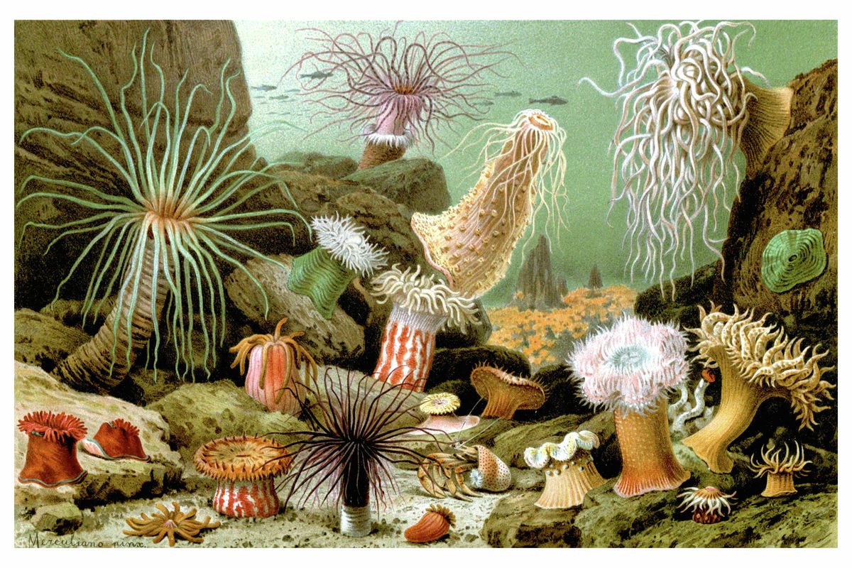 Various Examples of Sea Anemones