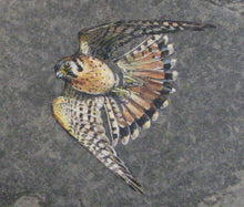 Load image into Gallery viewer, American Kestrel