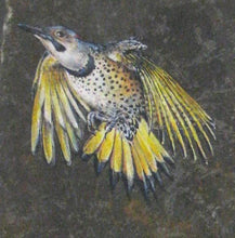 Load image into Gallery viewer, Yellow Shafted Flicker
