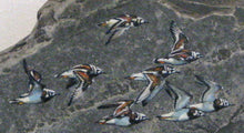 Load image into Gallery viewer, Ruddy Turnstones