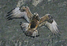 Load image into Gallery viewer, Rough Legged Hawk