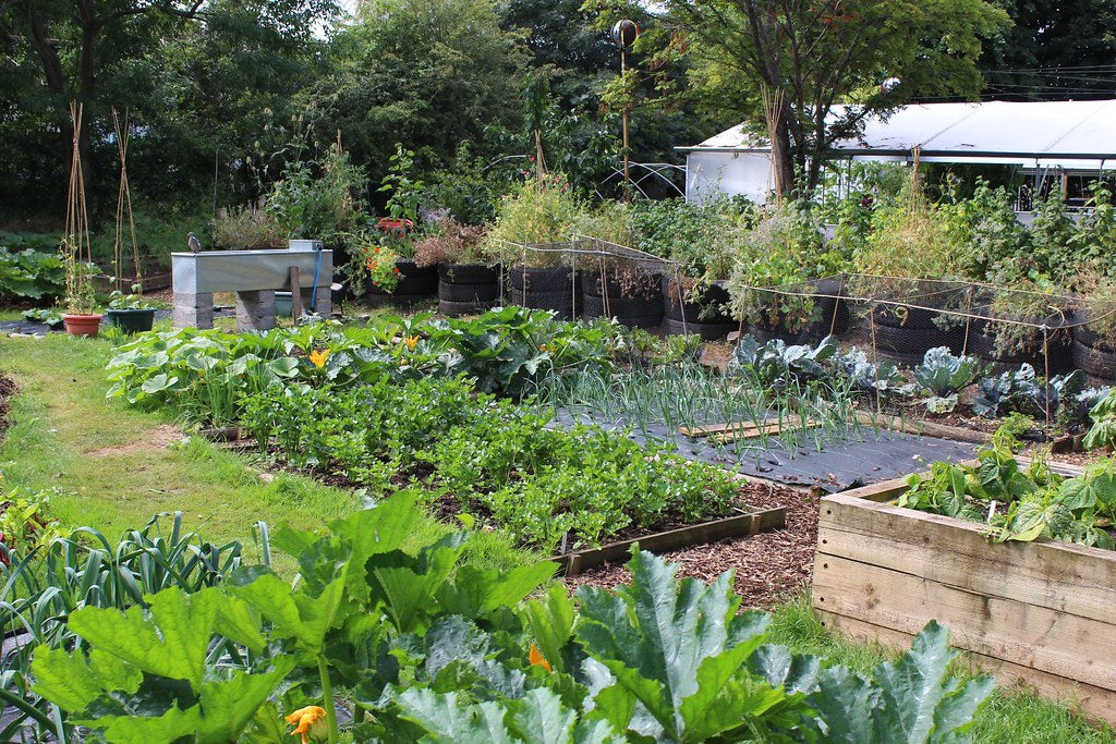 Community Growing Gardens at Earthsong Cohousing Development