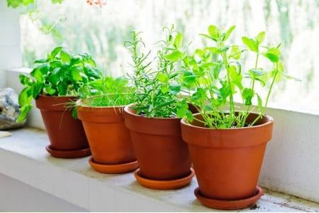 beginners herb healthy gardening