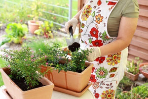 A Beginner's Guide to Planting a Garden