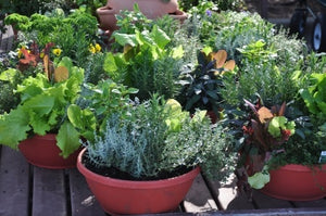 Sustainable Gardening in Limited Space