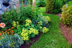 A Beginner's Guide to Annuals and Biennials