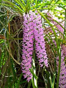 Essential Guide to Orchids