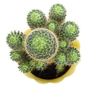 A Beginner's Guide to Cacti