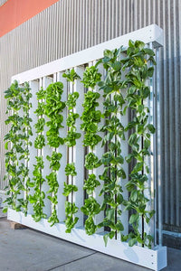 Introduction to Hydroponics - Growing Your Plants Without Any Soil