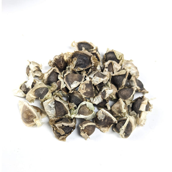Fresh Moringa Seeds