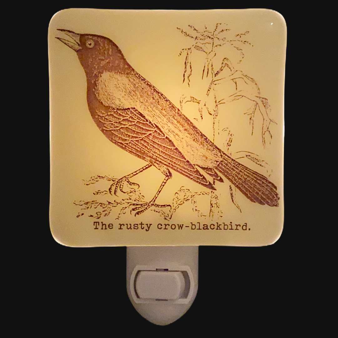 Blackbird Crow Raven Night Light