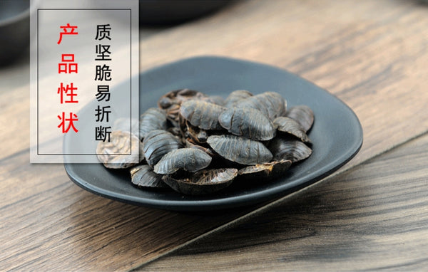 Di Bie Chong Woodlouse Eupolyphaga Sinensis Walker - Traditional Chinese Medicine - 999tcm - 999TCM