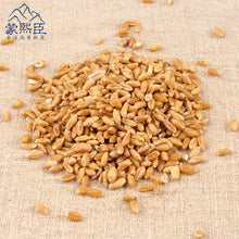 Load image into Gallery viewer, Fu Xiao Mai Blighted Wheat Fructus Tritici Levis - 999 TCM