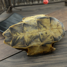 Load image into Gallery viewer, Gui Ban Tortoise Shell Carapax et Plastrum Testudinis - 999 TCM