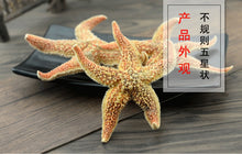 Load image into Gallery viewer, Hai Pan Che Starfish Sea Star Five-pointed Star Asterias Rollestoni