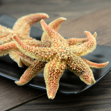 Load image into Gallery viewer, Hai Pan Che Starfish Sea Star Five-pointed Star Asterias Rollestoni - 999 TCM