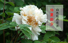 Load image into Gallery viewer, Mu Dan Pi Tree Peony Bark Cortex Moutan Paeonia Suffruticosa Andr. - 999 TCM