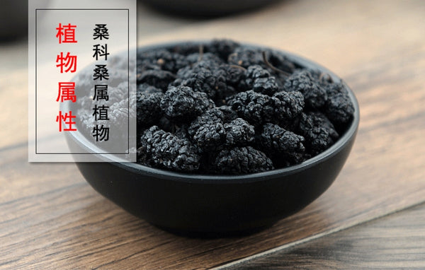 Sang Shen Fructus Mori Mulberry Fruit Mulberry Morus Alba L. - Traditional Chinese Medicine - 999tcm - 999TCM
