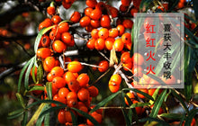 Load image into Gallery viewer, Sha Ji 沙棘 Fructus Hippophae Sea-buckthorn Hippophae Rhamnoides L.