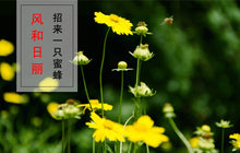 Load image into Gallery viewer, Ye Ju Hua Wild Chrysanthemum Flos Chrysanthemi Indici - 999 TCM