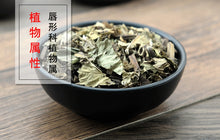 Load image into Gallery viewer, Ze Lan 泽兰 Hiraute Shiny Bugleweed Herb Herba Lycopi