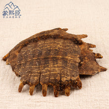 Load image into Gallery viewer, Zhi Bie Jia Turtle Shell Carapax Trionycis Trionyx Sinensis Wiegmann - 999 TCM