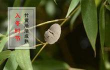 Load image into Gallery viewer, Zhu Huang Herb of Tabasheer Shiraia Bambusicola P. Henn. - 999 TCM