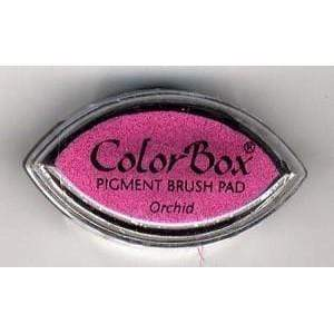 Colorbox Cat's eye orchid CL11034 ARTEMIO Oferta CENTROARTESANO