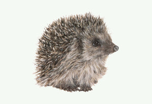 Percy Hedgehog Giclee Print