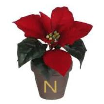 Poinsettia Christmas Flower with Personalised Pot - Small 17cm
