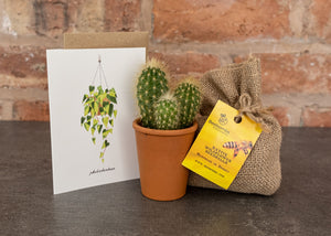 Cactus, Bee Bomb & Card Gift Set