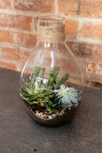 Load image into Gallery viewer, Glass Terrarium