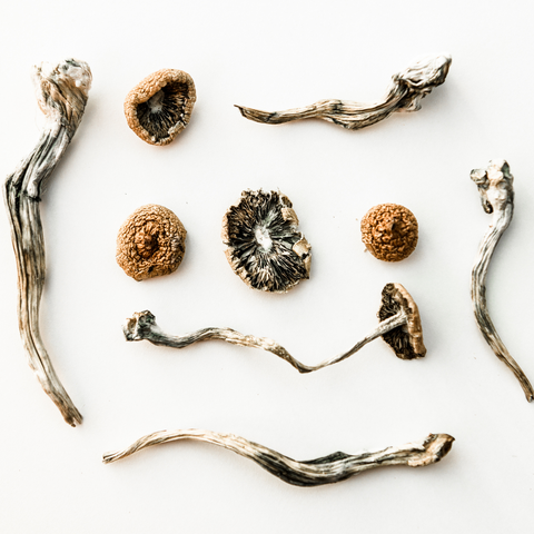 psychedelic mushrooms in wellness