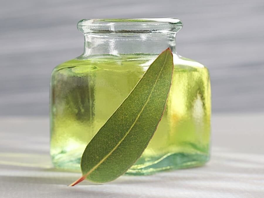 The Amazing Uses and Benefits of Eucalyptus Oil
