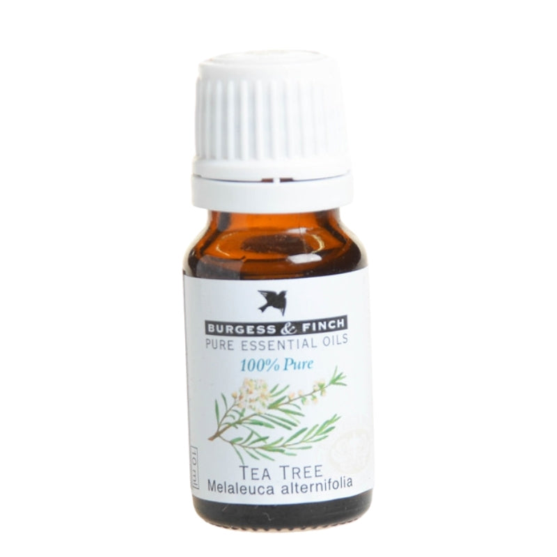 Burgess & Finch Tea Tree Essential Oil