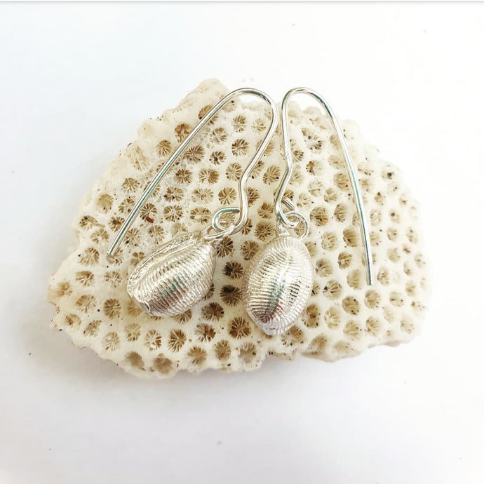 Small cowrie earrings