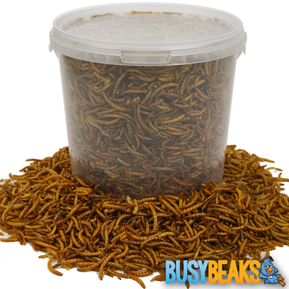 Dried Mealworms (Tubs)