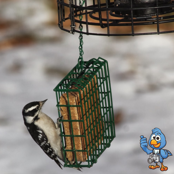BusyBeaks Worm & Insect Suet Blocks | Premium Bird Food