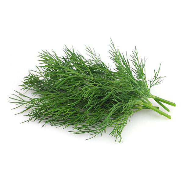 Dill Leaves (Soya سوئے کا ساگ)