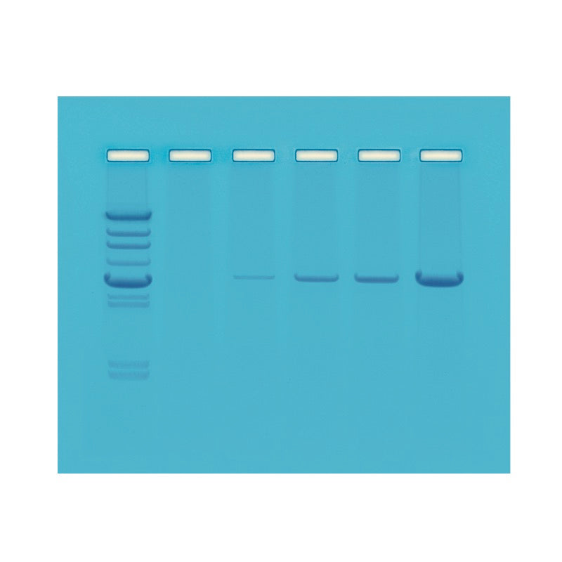 103 PCR - Polymerase Chain Reaction