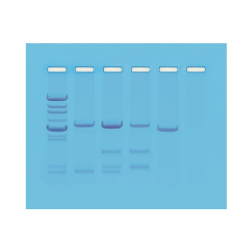 Edvotek 114 DNA Paternity Test Simulation