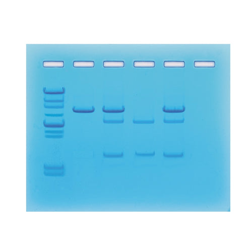 Edvotek 115 Family Pedigree Cancer Gene Detection