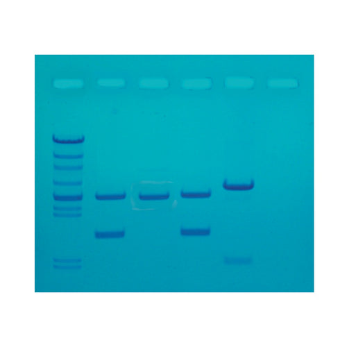 Edvotek 130 DNA fingerprinting made simple