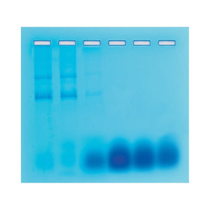 Edvotek 204 Separation of RNA and DNA by Gel Filtration Chromatography