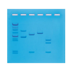 206 Restriction Enzyme Mapping